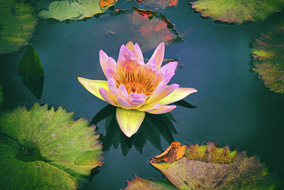 Waterlilies Digital Art - Autumn Waterlily by Jessica Jenney
