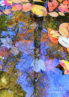 Photograph - Autumn Watermark by Todd Breitling