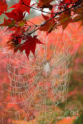 Photograph - Autumn Web by Frank Townsley