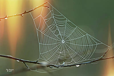 Photograph - Autumn Web by Peg Runyan