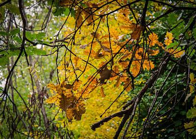Photograph - Autumn Whispers by Andrea Mazzocchetti