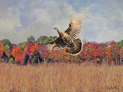 Digital Art - Autumn Wild Turkey by Spadecaller