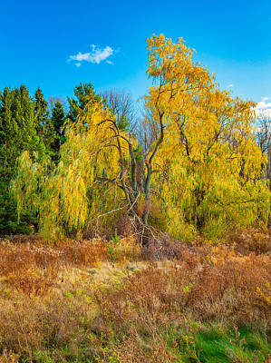 Autumn Photograph - Autumn Willow by Steve Harrington