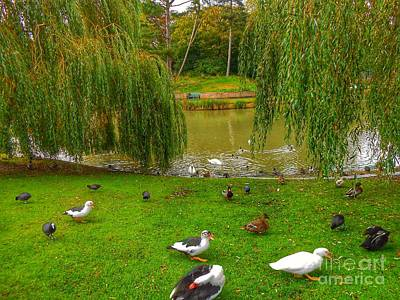 Photograph - Autumn Willows At Hesketh Park 2 by Joan-Violet Stretch