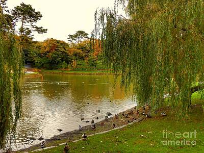 Photograph - Autumn Willows At Hesketh Park by Joan-Violet Stretch
