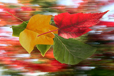 Photograph - Autumn Wind by Barbara  White