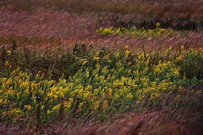 Konza Prairie Photograph - Autumn Wind Blowing Golden Rod by Jim Richardson