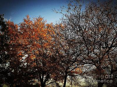 Frank J Casella Royalty-Free and Rights-Managed Images - Autumn Wind by Frank J Casella