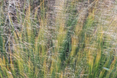 Photograph - Autumn Winds Through The Salt Marsh by Steve Gravano