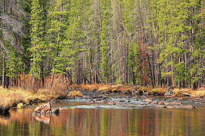 Photograph - Autumn Wise River Montana by Jennie Marie Schell