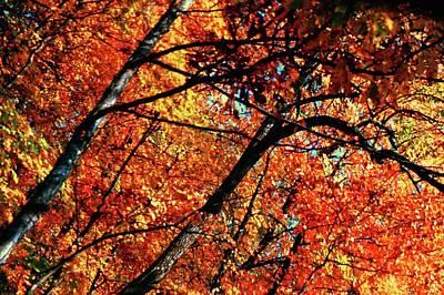 Photograph - Autumn Wonder by Gary Wonning