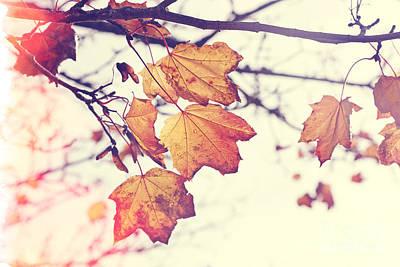 Autumn Wonder - Natalie Kinnear Photography Art Print