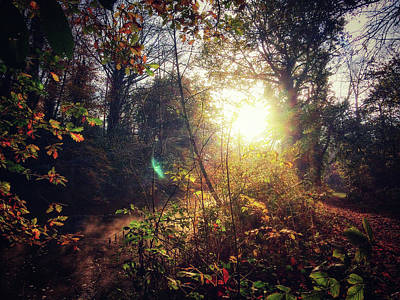 Photograph - Autumn Woodland by Andy Walsh