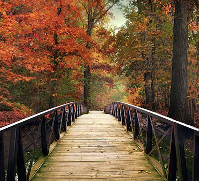 Photograph - Autumn Woodland Crossing by Jessica Jenney