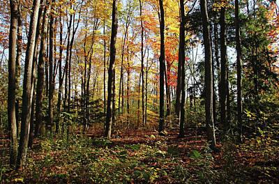 Photograph - Autumn Woodland by Debbie Oppermann