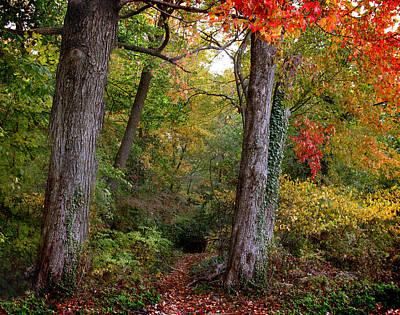 Autumn Woodland Art Print by Jessica Jenney