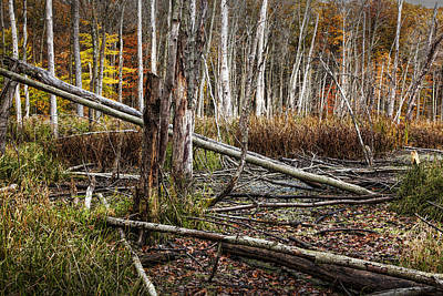 Photograph - Autumn Woodland Marsh Scene by Randall Nyhof