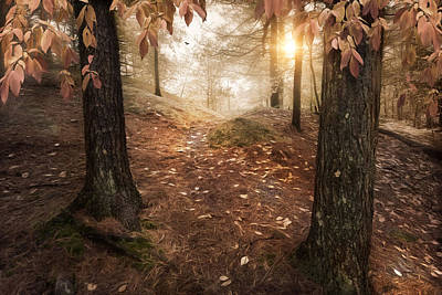 Photograph - Autumn Woodland by Robin-Lee Vieira