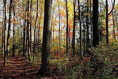 Photograph - Autumn Woodland Trail by Debbie Oppermann