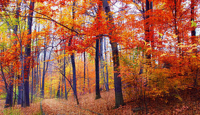 Autumn Landscape Photograph - Autumn Woodland Trail by Jessica Jenney