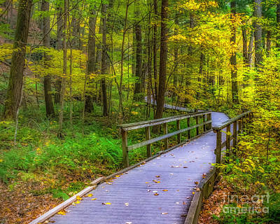 Photograph - Autumn Woodland Trail by Nick Zelinsky