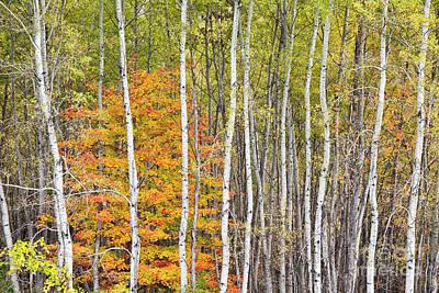 Photograph - Autumn Woods by Alan L Graham
