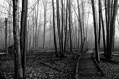 Photograph - Autumn Woods Black And White by Debbie Oppermann