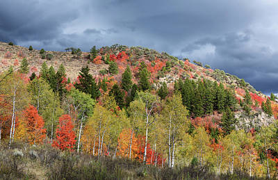 Photograph - Autumn Woods In The Caribou-targhee Forest by Kathleen Bishop