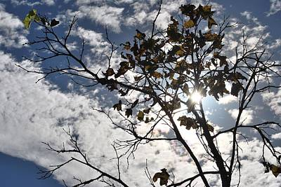 Autumn Yellow Back-lit Tree Branch Art Print