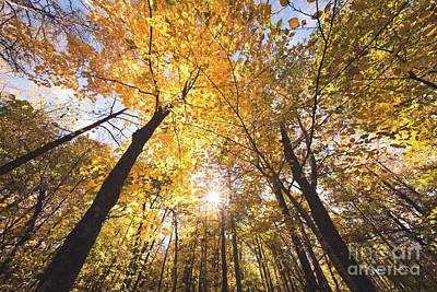 Autumn Yellow Art Print by Ernesto Ruiz