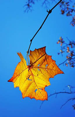 Photograph - Autumn Yellow Leaf - Nature Photography by Ann Powell