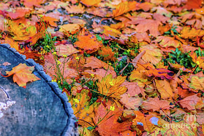 Photograph - Autumnal 1 by Claudia M Photography