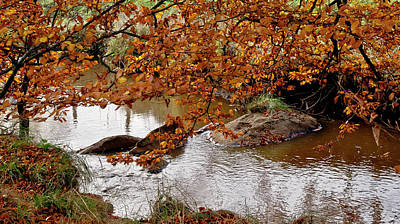Photograph - Autumnal Branches Over The Creek by Elena Perelman