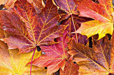 Autumnal Carpet Art Print