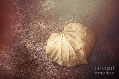 Aging Photograph - Autumnal Changes by Jorgo Photography - Wall Art Gallery