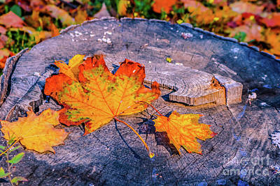 Photograph - Autumnal by Claudia M Photography