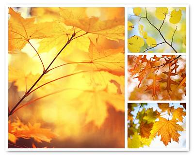 Photograph - Autumnal Colors 1. Four Seasons Collage by Jenny Rainbow