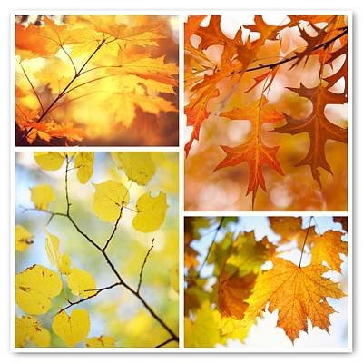 Photograph - Autumnal Colors. Four Seasons Collage by Jenny Rainbow