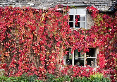 Photograph - Autumnal Cottage by Tim Gainey