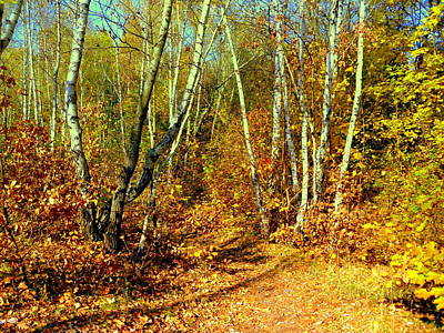 Photograph - Autumnal Forest by Henryk Gorecki