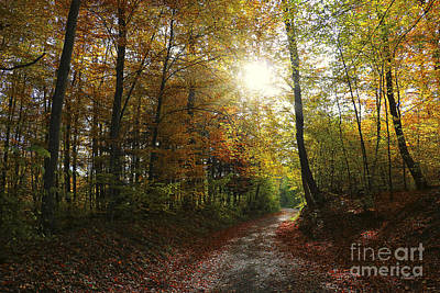 Photograph - Autumnal Forest by Jutta Maria Pusl