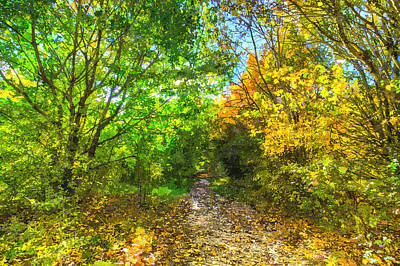 Photograph - Autumnal Forest Path Art by David Pyatt