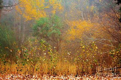 Photograph - Autumnal Glory by Elaine Teague