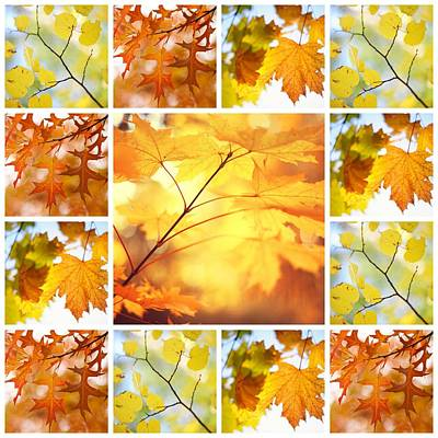 Photograph - Autumnal Glory. Mosaic Collage by Jenny Rainbow
