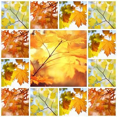 Photograph - Autumnal Glory. Mosaic Collage by Jenny Rainbow