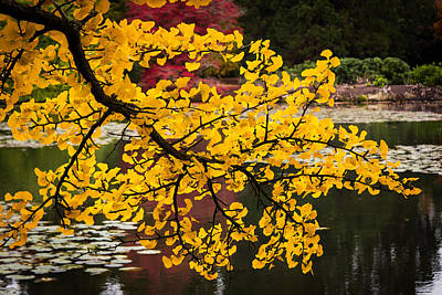 Photograph - Autumnal Gold by Paul Sharman