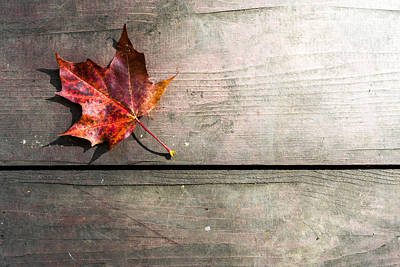 Photograph - Red Autumn Leaf Resting by John Williams