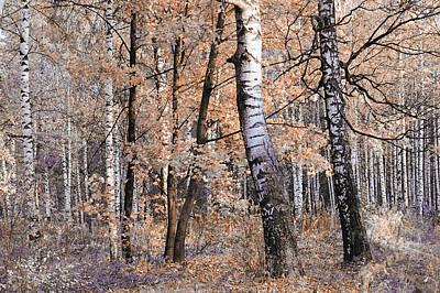 Photograph - Autumnal Lightness by Jenny Rainbow
