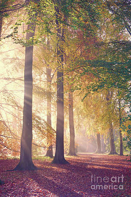 Autumnal Mists Art Print