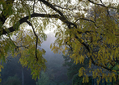 Photograph -  Autumnal Misty Mood Vl by Shirley Mitchell